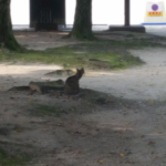 このノラ猫全然逃げねえなと思って口笛吹きながら近づいた