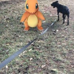 ポケモンGOで遊んでると思われたくない大人達に、散歩のふりをするための犬を貸し出すという保健所のサービスに順番待ちができるほどの人気が。