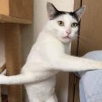 キャットタワーとベッドに同時に爪が引っかかってしまった猫ちゃん