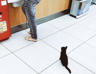 お会計しようと思ってレジに行ったら、わたしの前のお客様さんが子猫でした。