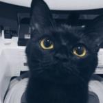 眼差しの愛らしさには定評のある黒猫です