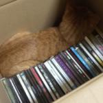 CD整理してたら目を離した隙に猫が詰まってた