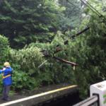 原宿駅で倒木して山手線止まってる、