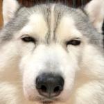 同じ犬です