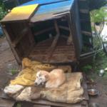 雨と風やばいなーって思い 外を見たら 犬小屋飛ばされてました