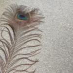 孔雀の羽根を床にこすりつけると想像を絶するむしのようなキモさになるのは皆様ご存知ですか?
