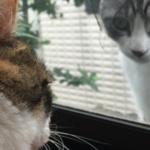 最近、毎朝野良猫がうちの猫にメンチ切りに来る。