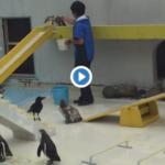 水族館のペンギンショーが酷い
