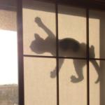 西日が凄いので障子を半分くらい閉めてたんだけど、網戸を猫が登っていてその西日に照らされたシルエットったら!!!
