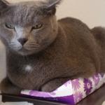 「ティッシュ箱つぶす事は、当然」 という表情でつぶしています