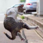 カンフー猫が成長して動きが洗練されている