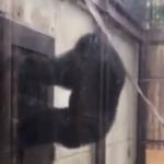 徳島のチンパンジーやばいって(笑)