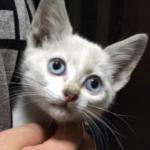 母親が車を運転していたら、どこからともなく猫の鳴き声がして車体の下を調べてみると、なんとエンジンルームに子猫がいました。
