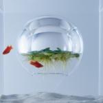 《waterscape》は水中に空気のある空間を作り浮草を浮かべる。魚は水草を食べることで生命を維持、植物は空気が水中内に滞留して温度が上がり温室効果で安定して育つ。