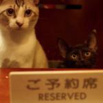 予約した席に猫が座ってるんですけど