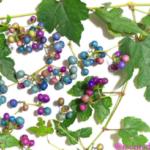 ノブドウの実。この実の殆どにブドウタマバエやブドウトガリバチの幼虫が寄生していて、その影響でこのような青や紫の鮮やかな色になる。