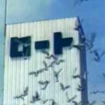 鳥がロート製薬みたいと思って検索したら、初代CMは「撮影のために本社屋上の鳩舎にたくさんのハトを飼い、担当の女子社員が毎日、手のひらにエサをのせて養育。