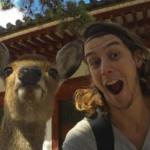 奈良の鹿は外国人にはウェーイなのに、日本人には冷たいってほんとうですか?