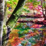 昨日、用事で軽井沢に行って来ました…とても美しかった… 日本っていいなぁと思いました