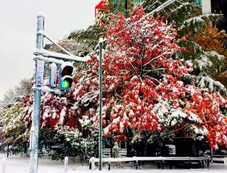 紅葉と積雪のコラボレーション。北海道とはいえめったに見られないらしい。