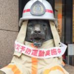 銀座三越のライオンから威厳が失われてるw消防士さんの格好をさせてもらって喜んでいるようにしか見えない顔www
