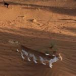 ネコバスが、トレンドにあがっていたので、砂漠のネコバス、上げときます。