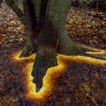 なんだこの木、地下に魔法物質でも埋まってるのか!?と思ったら落ち葉でこういうグラデーションを作っているのですね。