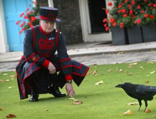 ロンドン塔でワタリガラスを飼育してるレイヴンマスターって職業かっこよい・・・ わたしもレイヴンマスターになりたい