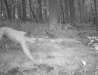 【米国】野生動物を観察するため森にカメラトラップを仕掛けたところ、四つんばいで走り回る『謎の全裸男』が撮影され研究者困惑