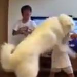 喧嘩を止めようとする犬が可愛い