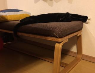 妹の家の猫が棒みたいなので見てくれ