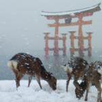 雪の厳島神社。 こんな景色めったに見られませんよね。 美しいです。