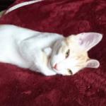 友達の猫の寝姿がすごくファラオだった