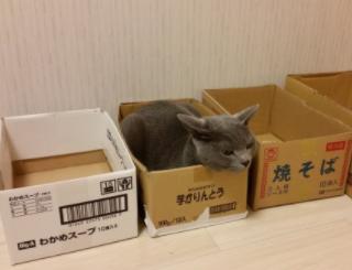 どれだけ箱があっても、芋かりんとうの箱しか入らない。