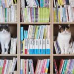 本棚を空けておくと猫が転送されてくる