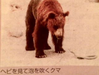 クマの専門書によるとクマは本当にヘビが苦手らしい