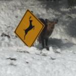 鹿注意の看板に隠れててわろた