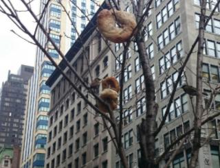 ストリートを歩いていたら、街路樹の枝に何かが突き刺さってるのです。