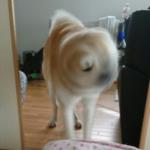 異次元から迎えにきた犬