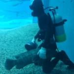 海遊館にて。清掃を終えたダイバーさんのそばにずっといた魚がいて、気になって見てたら