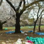 今日、ロケで代々木公園に行って来ました。桜が咲き誇り最高のロケーション…。