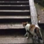 伏見稲荷大社で猫に道案内してもらった…