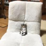 座椅子でテレビを見てたら眠くなったみたいで