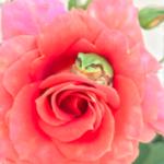 今日もバラの中にカエルいた おかん曰く毎日うちのバラの中にいるらしい