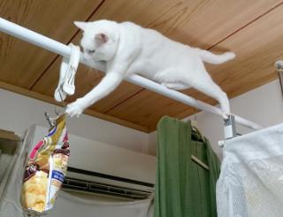 猫がスナック菓子の袋をかじるので、手の届かない場所へ吊るした結果・・・手が届いてしまった例