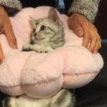 3ヶ月ぐらいの時のお猫