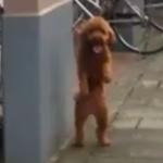 なんか踊ってる犬いた