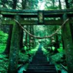 翡 翠 の 杜 に 迷 い 込 ん だ 日。