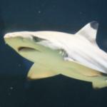 打ち合わせの時間を間違えて困ったようなサメが撮れた