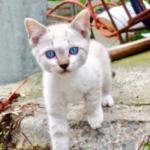 碧眼の子猫、寄ってきた